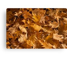 Golden Birch Leaves  Canvas Print