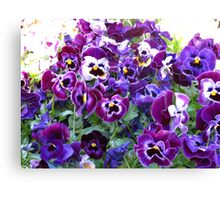 Purple Pansy Frenzy Canvas Print