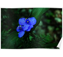 Blue Blossoms Poster