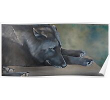 Black Wolf Resting Poster