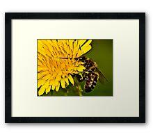 Life's Nectar Framed Print