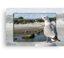 Gull on the Outside ~ Looking Back Canvas Print