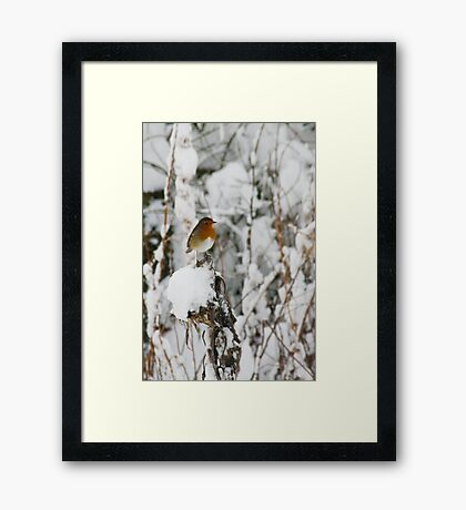Robin red breast winter design for Christmas  Framed Print