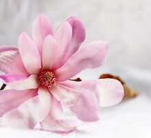 Still Magnolia by Evita