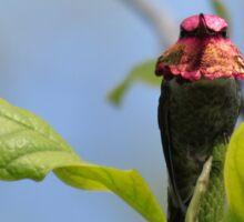 Male Anna's hummingbird Sticker