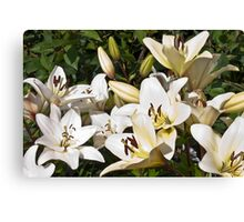White Lilies Canvas Print
