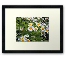 Humble Daisy Framed Print