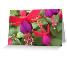Fuchsia Flowers Greeting Card