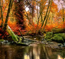 The Colors Of Life ~ Fall Colors ~ by Charles & Patricia   Harkins ~ Picture Oregon