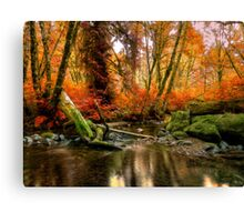 The Colors Of Life ~ Fall Colors ~ Canvas Print