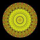Fern Mandala by Michael Matthews