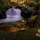 I Had A Dream ~ Oregon Fall Colors ~ by Charles & Patricia   Harkins ~ Picture Oregon