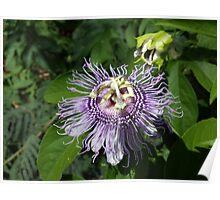 La flor de la pasión Poster