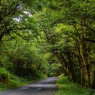 Oregon Back Roads ~ Summer Colors ~ by Charles & Patricia   Harkins ~ Picture Oregon