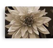 ~Dahlia Daze~ Canvas Print