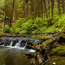 I Got Stumped ~ Oregon Cascades ~ by Charles & Patricia   Harkins ~ Picture Oregon