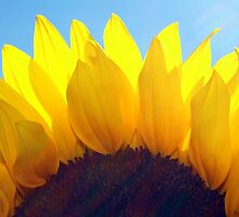 ~sunshine~ by Terri~Lynn Bealle