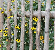 Fence with yellow flowers by RosiLorz