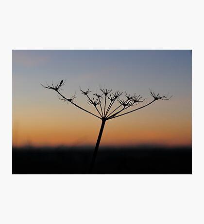 """ Silent Alpenglow "" Photographic Print"