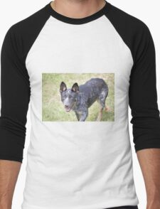 Milo the Blue Heeler Men's Baseball ¾ T-Shirt