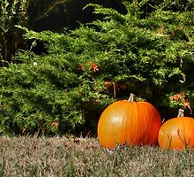 Pumpkins! by Vicki Spindler (VHS Photography)