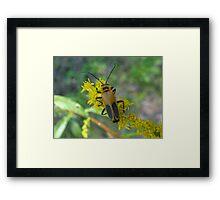 Leatherwing Beetle Framed Print