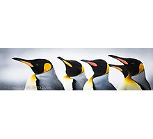 Penguin Parade Photographic Print