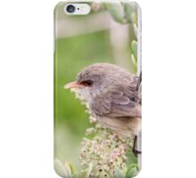 Variegated Fairywren iPhone Case/Skin
