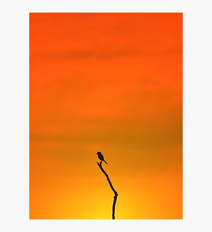 Wild Bird Silhouette - Simplistic Colorful Backgrounds from Nature Photographic Print