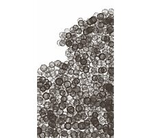 celulas Photographic Print