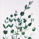 Eucalyptus #1 by ALICIABOCK