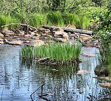 Pond at Belleuve by Ed Warick
