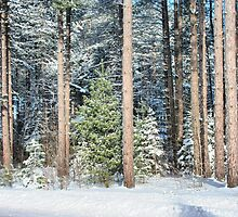 Winter Trees by Ed Warick