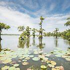 Lake Martin at Noon by Briar Richard