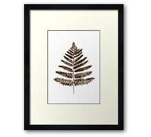 Brown Fern Floral Painting Illustration Drawing Watercolour Poster Framed Print