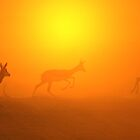 Springbok Silhouette - Wildlife Background of Colorful Nature by LivingWild