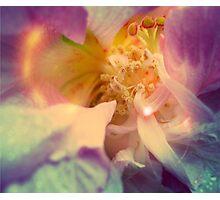 Secret Garden | Japanese rose Photographic Print