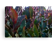 Leaves at Heligan Canvas Print