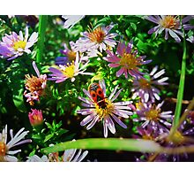 Japanese red bug Photographic Print