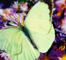 Cabbage butterfly Sticker