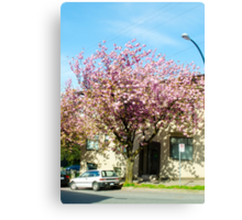 Spring Blossoms/Vancouver Canvas Print