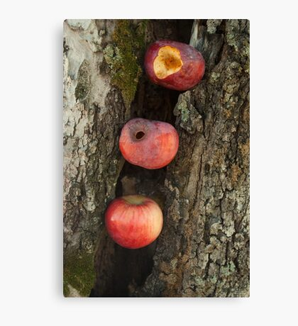 Apples in a Tree Canvas Print