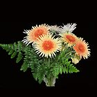 GERBERA AND FERN by Margaret Stevens