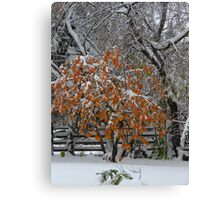 Oct Snowstorm 2016 Canvas Print