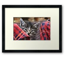 portrait of a small fluffy kitten Framed Print