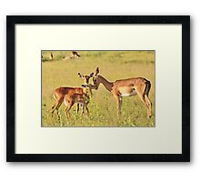 Impala - Motherly Love in Nature Framed Print