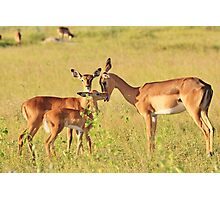 Impala - Motherly Love in Nature Photographic Print