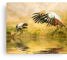 Grey Crowned Cranes. Canvas Print