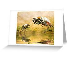 Grey Crowned Cranes. Greeting Card