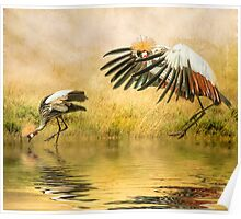 Grey Crowned Cranes. Poster